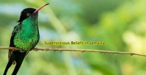superstition-Jamaica